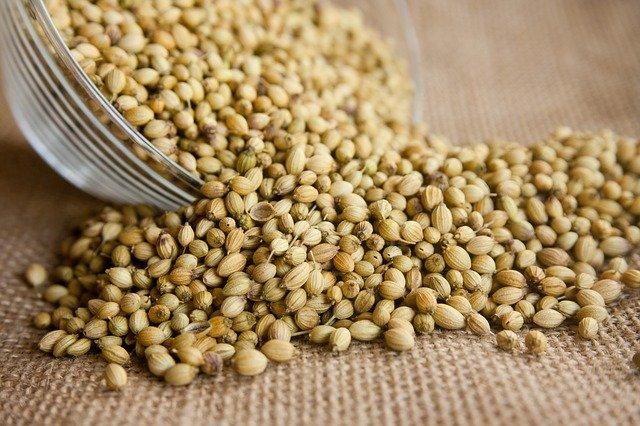 Aus einer kleinen Schüssel werden Koriander-Samen ausgeschüttet