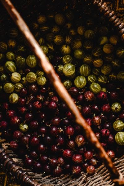 Grüne und rote Stachelbeeren liegen nach dem Pflücken in einem Korb