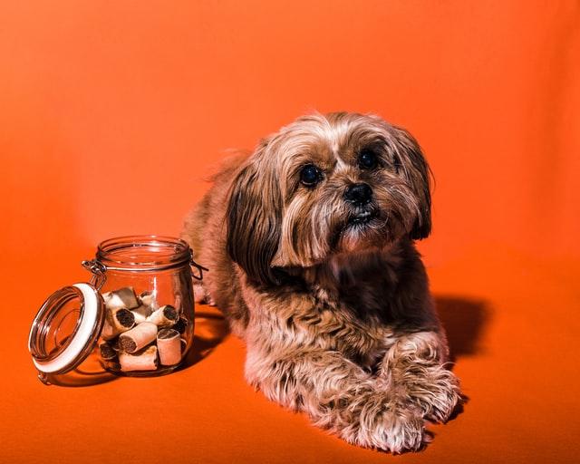 Ein Hund sitzt neben einem Glas mit Leckerlis drin.