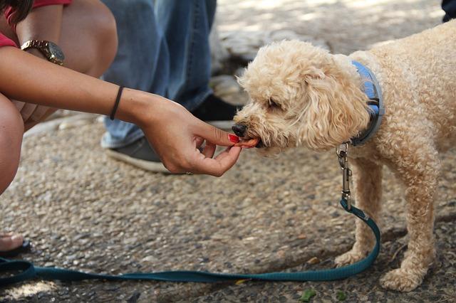 Ein heller Hund bekommt ein Leckerli von Frauchen